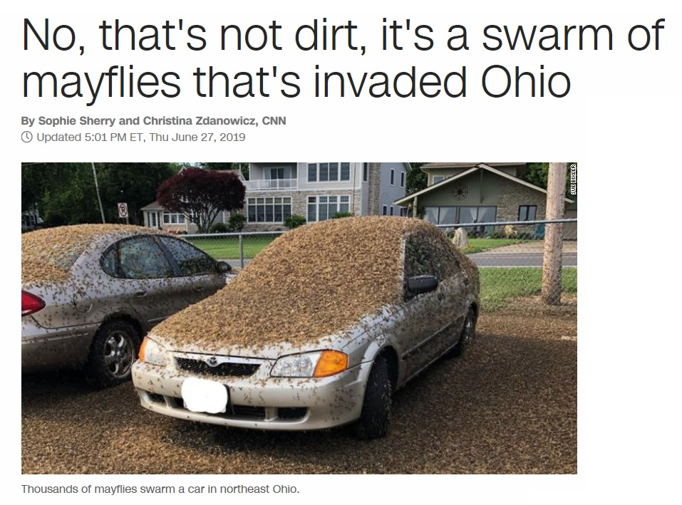 They're baaack-mayflies.jpg