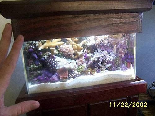 Live coral vases as a new type of aquarium decor-mini.75.jpg