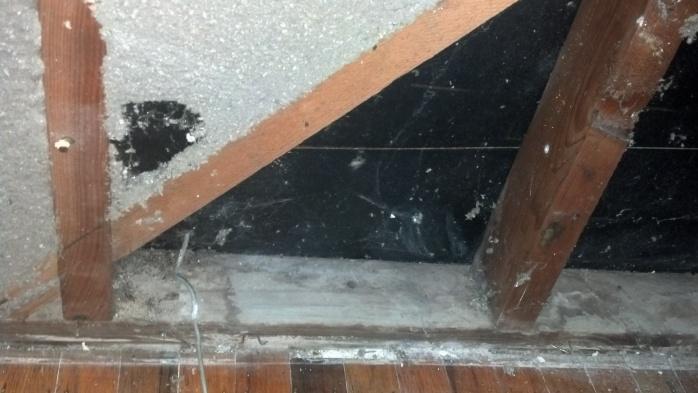 Mold on sheet rock-mold-3.jpg