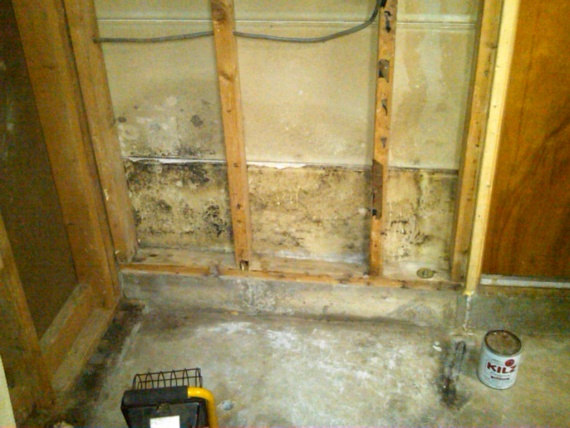 Mold in between walls!-mold-garage-wall.jpg