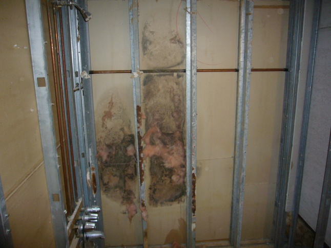 Mold resolution help needed-mold.jpg