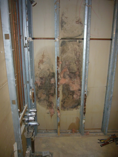 Mold resolution help needed-mold1.jpg