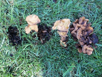 Mushrooms, anyone???-mushrooms4.jpg