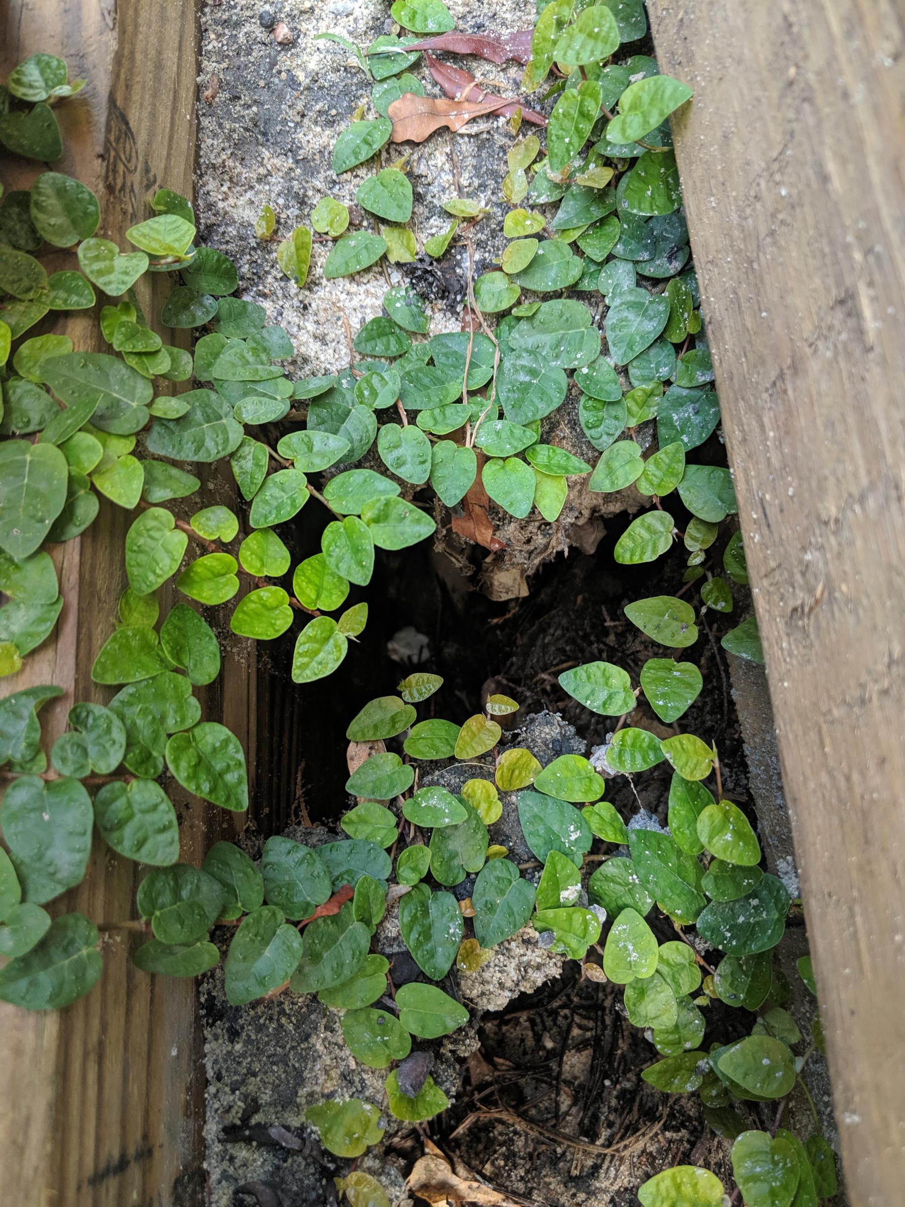 Timber retaining wall repair help-mvimg_20190715_172704.jpg