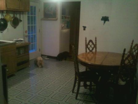 Kitchen remodel-my-kitchen4.jpg