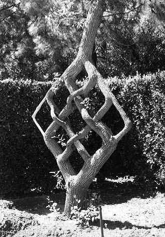 pruning trees...-neadle.jpg