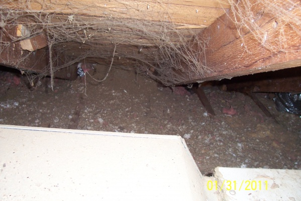 squirrel nest-nest11.jpg