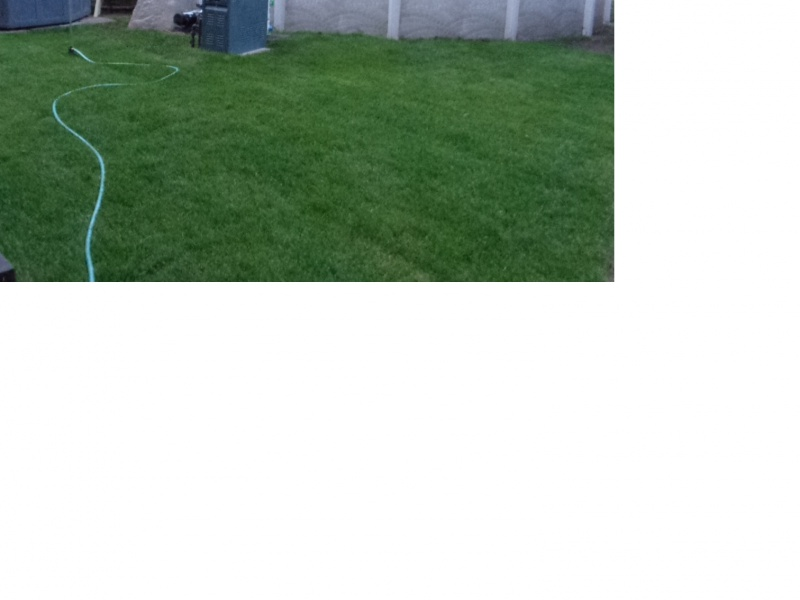 relatively new sod slowly dying in patches-new-sod-may.jpg