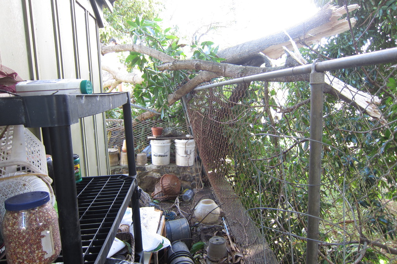 replace chain link fence