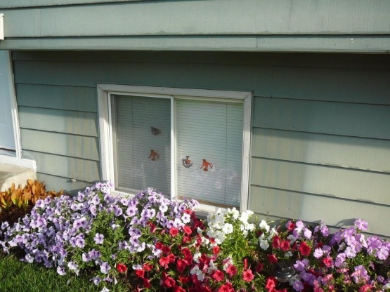 new hardi siding and windows - what have I started? aargh!-outside-reno-09-009.jpg