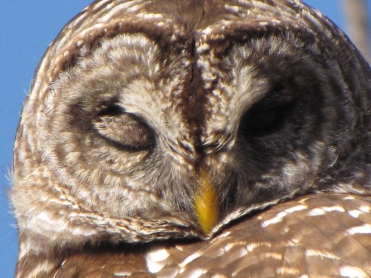 Do You Enjoy Taking Pictures?-owl-closest-12-10-09.jpg