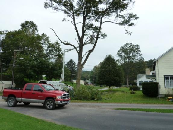 Big tree down, now what?-p1000345.jpg