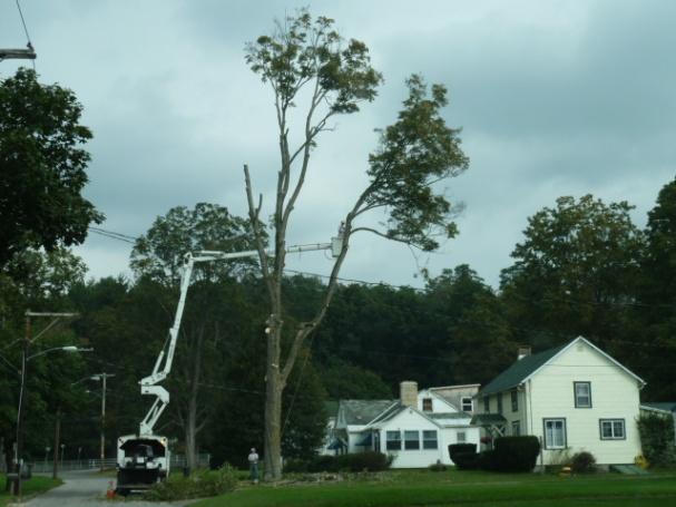 Big tree down, now what?-p1000346.jpg