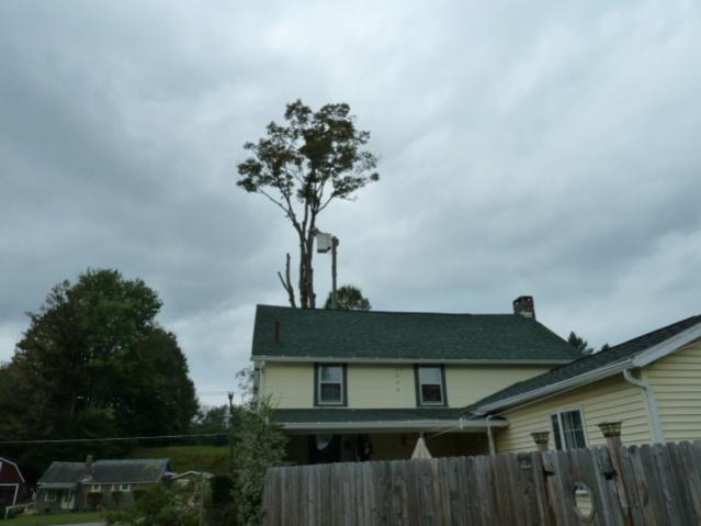Big tree down, now what?-p1000347.jpg