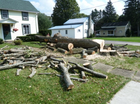 Big tree down, now what?-p1000350.jpg