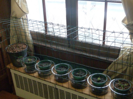 Cat proof cage for house plants.-p1010326.jpg