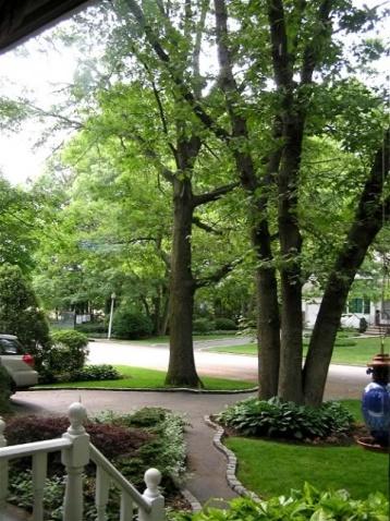 Help with my walkway-p1011392treer6-3-07.jpg