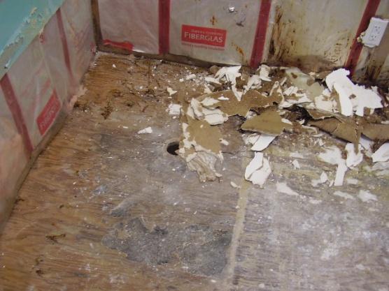 moldy wet sheetrock at base of bathtub-p1100059.jpg