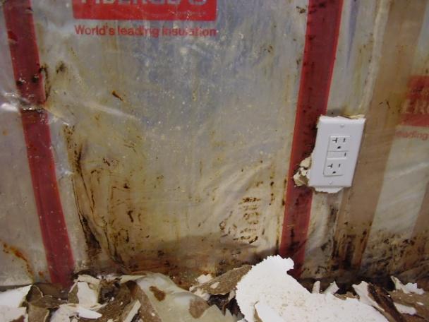 moldy wet sheetrock at base of bathtub-p1100062.jpg