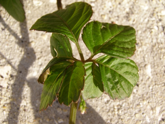 What is this weed?-p3280395.jpg