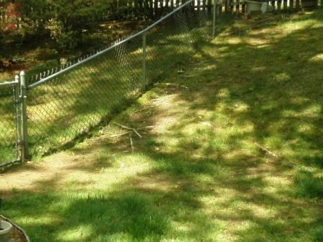 backyard is looking awful-p5130492.jpg