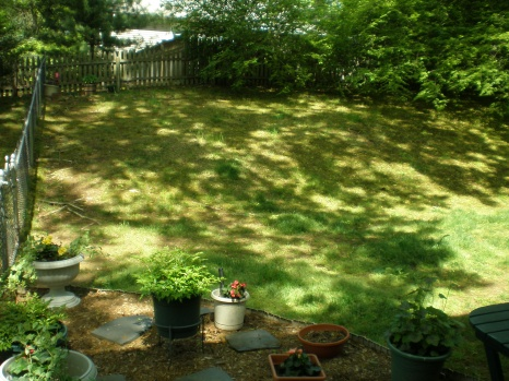 backyard is looking awful-p5130493.jpg