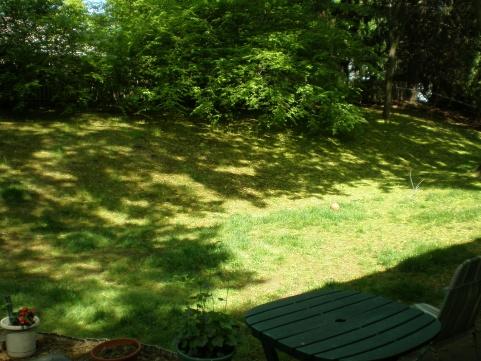 backyard is looking awful-p5130494.jpg