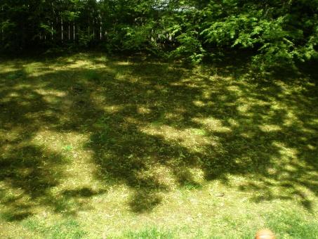 backyard is looking awful-p5130495.jpg