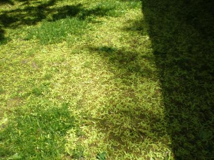 backyard is looking awful-p5130496.jpg