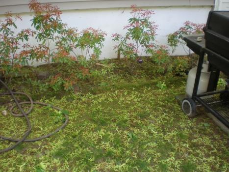 backyard is looking awful-p5130497.jpg