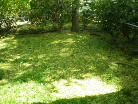 backyard is looking awful-p5130498.jpg