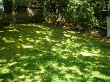 backyard is looking awful-p5130499.jpg