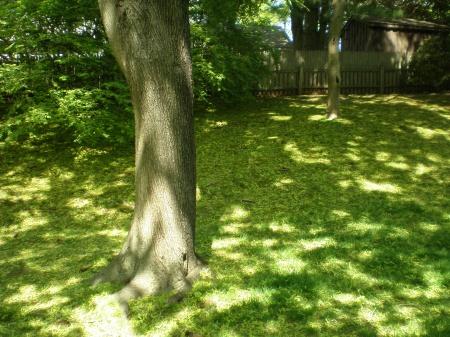 backyard is looking awful-p5130500.jpg