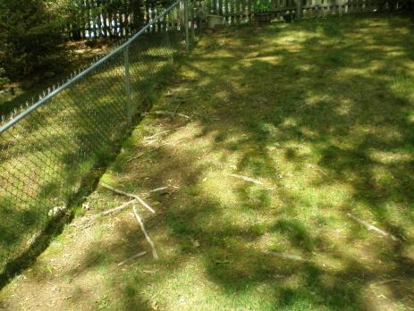 backyard is looking awful-p5130501.jpg