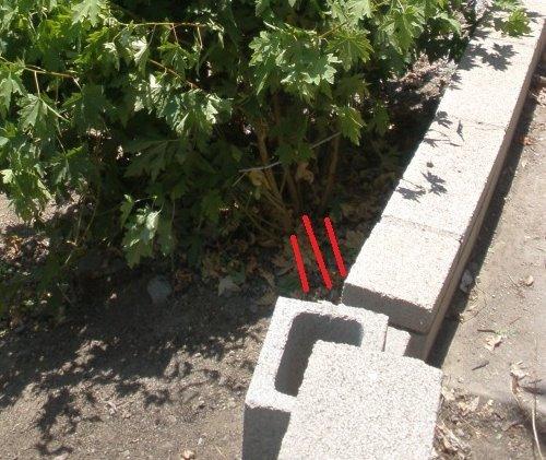 Make them grow straight-p7040335.jpg