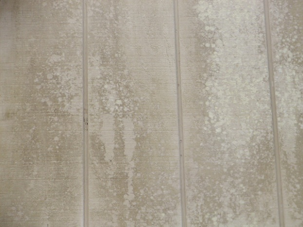 T1-11 siding mildew growth-p7110002.jpg