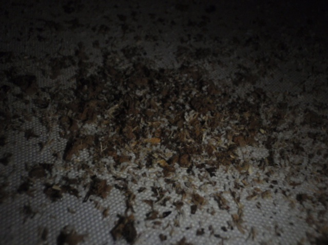 Maybe carpenter ants.-p8032120.jpg