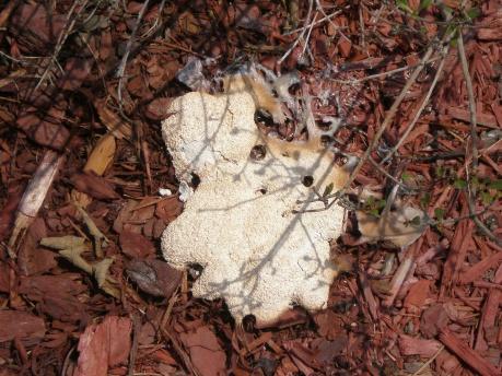 Fungus?!  Help!!-p8080149.jpg