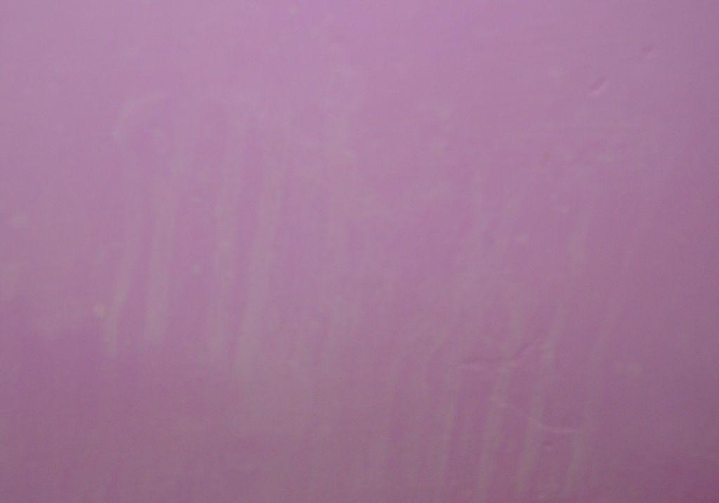 Paint problems-paint2.jpg