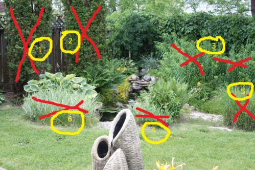 Suggestion for tidying this pond area-persons-yard.jpg