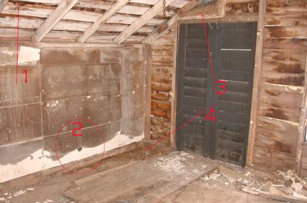 Eradicating Pests during Remodeling-pest1.jpg