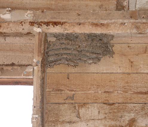 Eradicating Pests during Remodeling-pest3.jpg