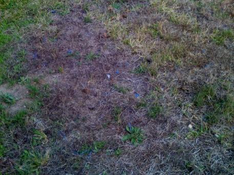 Name that Bush/Weed!!!!-photo-1-4-.jpg