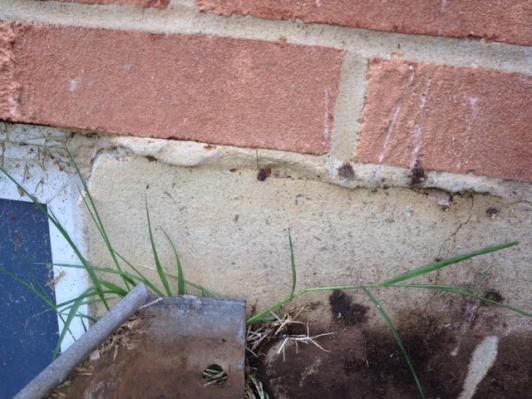 Need help fixing sill plate / rim joist due to carpentar ants / water-photo-1.jpg