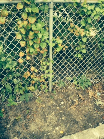Removing old Chain Link Fence-photo-1.jpg