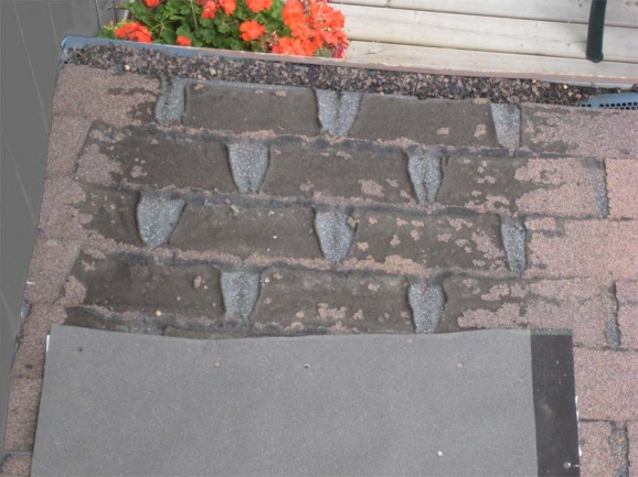 Help! -- what is causing these shingles to fail?-photo-2-6387.jpg