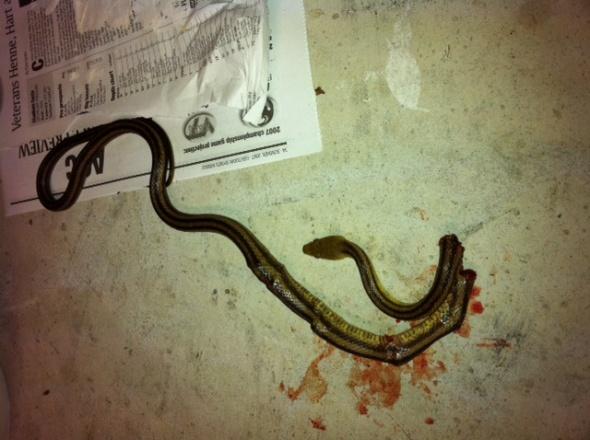 Snake in the house.-photo-2.jpg