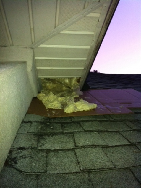 Rats in the attic.  Help.-photo-2.jpg