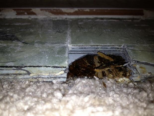 Bathroom floor under tile-photo-2.jpg