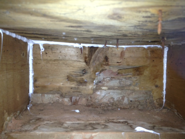 Need help fixing sill plate / rim joist due to carpentar ants / water-photo-4.jpg